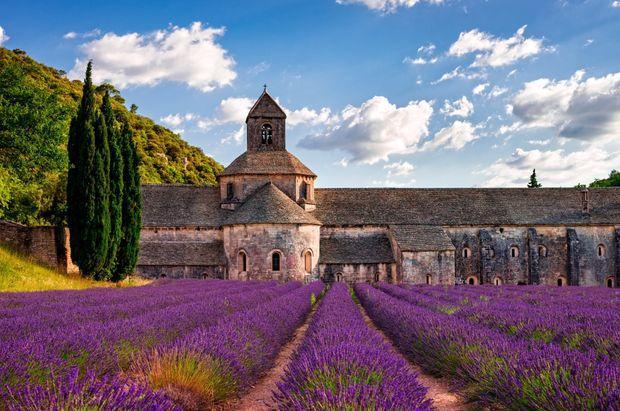 Provence zur Lavendelblüte