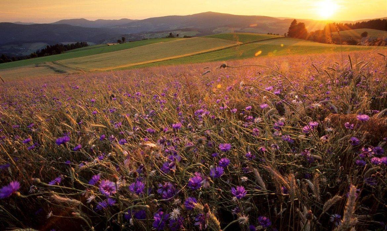 Steiermark - Waldheimat und Joglland